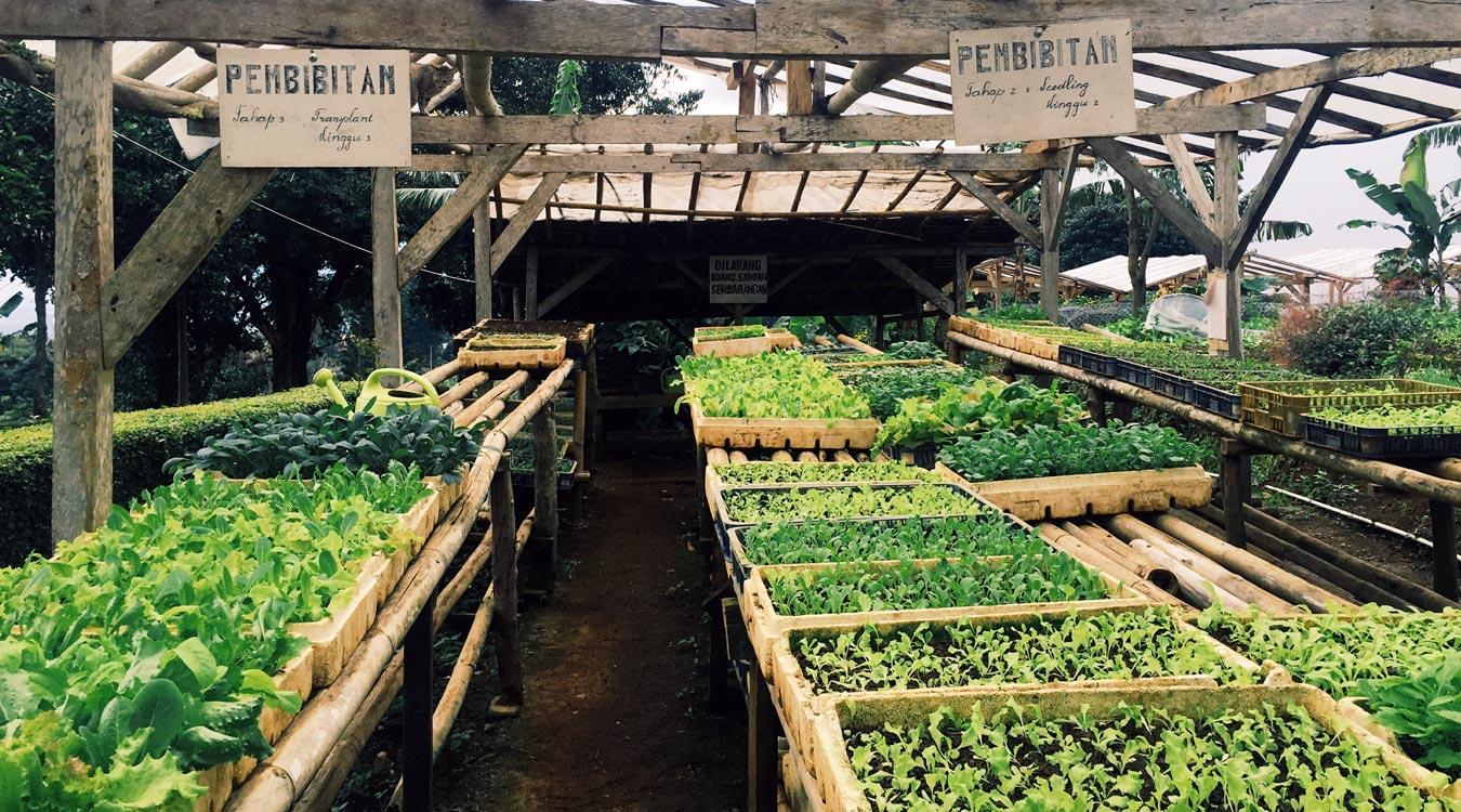 Organic-Farming-Trip2