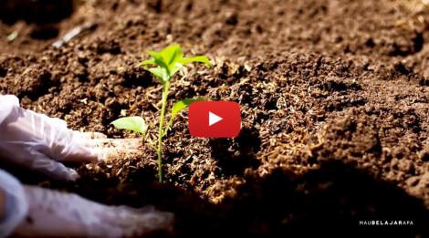 Organic-Farming-Youtubue