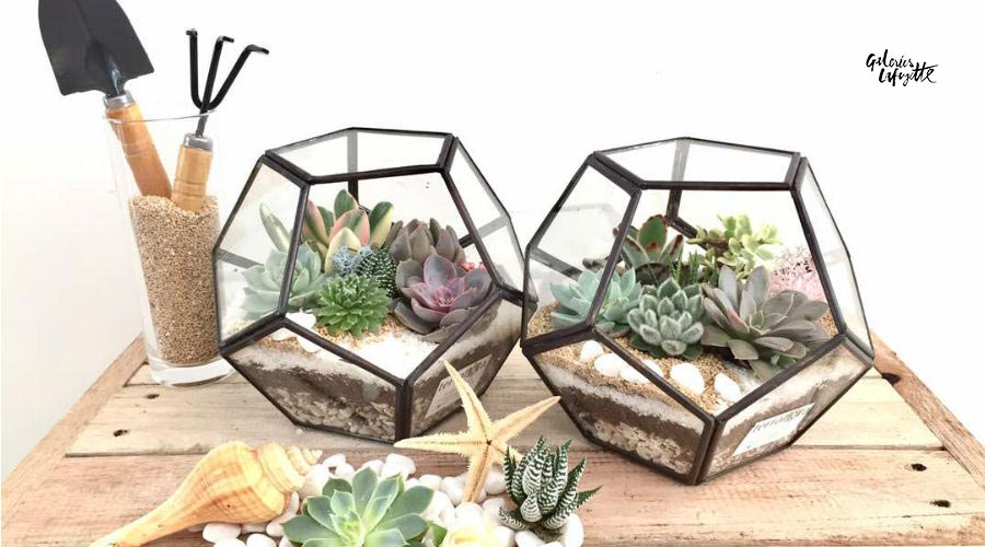 own-terrarium